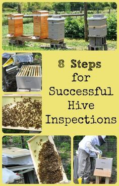 Describes eight tips for making honey bee hive inspections successful - especially for beginning beekeepers.