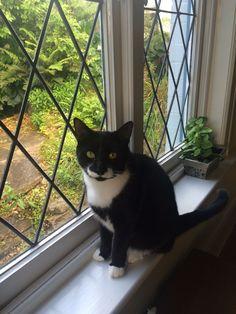 Mr Meowgi Cat | Pawshake