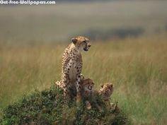 Cheetah 2560X1600 Photo