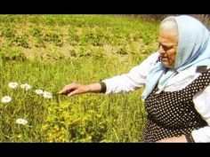 Монастырская травница: Не хотите болеть — накопайте себе три корня — лопуха, пырея и одуванчика