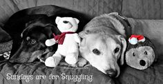 Sundays are for Snuggling ©LapdogCreations Dog Mom   Rescue Dogs   Sunday Snuggles   Dog Products   Happy Dogs   Pet Adoption