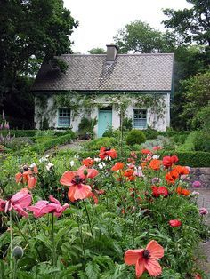 Irish Castle Garden Cottage by Madeuro, Style Cottage, Cute Cottage, Cottage Living, Cottage Homes, Little Cottages, Cabins And Cottages, Little Houses, Beautiful Gardens, Beautiful Homes