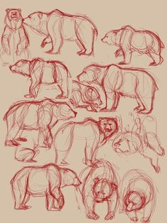 Drawing sketches, my drawings, animal sketches, animal drawings, drawing . Animal Sketches, Animal Drawings, Drawing Sketches, My Drawings, Bear Sketch, Art Tutorials, Drawing Tutorials, Bear Drawing, Sketches Tutorial
