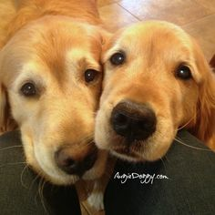 How can you say no to these faces?? It's like Steve and Bucky as cute, adorable dogs ;)