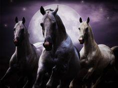 """Horses of the Moon"": By Ann Wehner Digital Artistry"