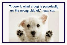a door is what a dog is perpetually on the wrong side of - Yahoo Canada Image Search Results Funny Dog Captions, Dog Quotes Funny, Cute Funny Dogs, Funny Dog Pictures, Love Pet, I Love Dogs, Puppy Love, Dog Shaming, Popular Quotes