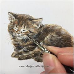 This little kitten illustration is one of a series in acrylics. Many of them are being published in my diaries or books. Interested in an original, Book or commission your own kitten in commission, contact me: www.marjoleinkruijt.com/shop/ (miniature portrait commissions are €120) #kitten #catart #cats #acrylics #artist #animalart #animaladdicts #portrait #marjoleinkruijt