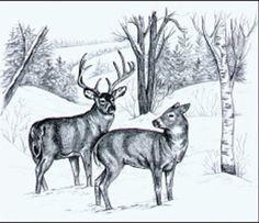 Seers in the snow pattern
