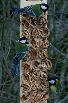 If you have some tree in your garden then you are surely hosting some every day. If you are a bird lover and wanted to welcome more and more birds to your garden. Why dont you try making DIY bird houses. See the bird house ideas we prepared for you. Bird House Feeder, Diy Bird Feeder, Decorative Bird Houses, Bird Houses Diy, Garden Art, Garden Design, Garden Roses, Bird Feeding Station, Bird Food