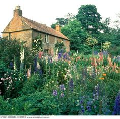 Beautiful cottage garden...Foxglove, Lupine, Delphinium, etc.