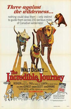 The Incredible Journey - movieposter.com