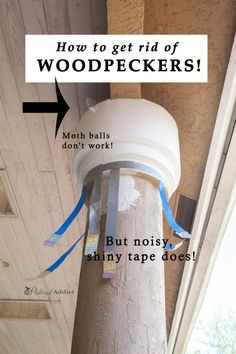 How do you get rid of woodpeckers when they are damaging your house? This is the only thing that worked for us!