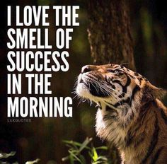 I Love The Smell Of Success In The Morning life quotes quotes quote inspirational quotes life quotes and sayings Tiger Quotes, Lion Quotes, Quotes Quotes, People Quotes, Hindi Quotes, Famous Quotes, Wisdom Quotes, Morning Words, Morning Images