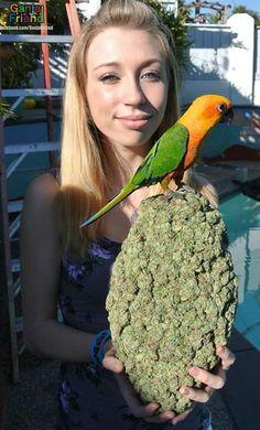 Bird weed