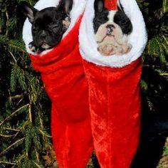 Daily bulldog photos on Facebook/yourdailybulldog  You'll be a fan too!!