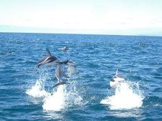 Zum Start & Test bei Pinterest eines der besten Fotos das mir zufällig in Neuseeland geglückt ist. / My first foto on Pinterest - a lucky dolphin shot in New Zealand.