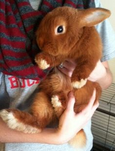 I've never seen a ginger bunny!