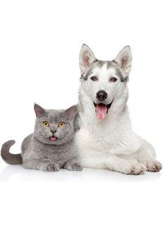 Tener una mascota tiene muchos aspectos positivos, muchas personas piensan que las mascotas los eligen y no al contrario. Ser dueño de una mascota, a pesar de que es una gran responsabilidad, trae tanta felicidad y, a menudo llena un vacío en la vida de las personas. Los animales dan cantidades enormes de felicidad a sus dueños sin siquiera saberlo.