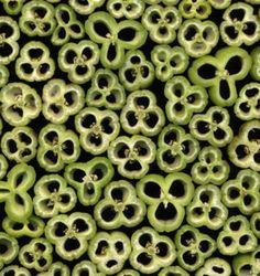 Hemerocallis