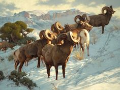 Official website for the wildlife art of Greg Beecham, Dubois Wyoming. Sheep Paintings, Wildlife Paintings, Wildlife Art, Animal Paintings, Animal Drawings, Big Horn Sheep, Deer Pictures, Hunting Art, Nature Artists