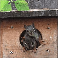 Baby squirrels.