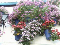 Impresionante balcón con pelargonios de distintos colores