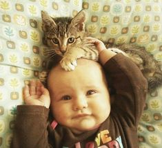 Funny Animal Pictures - View our collection of cute and funny pet videos and pics. New funny animal pictures and videos submitted daily. So Cute Baby, Cute Babies, Cute Cat Gif, Cute Cats, Funny Cats, Animals For Kids, Cute Baby Animals, Animals And Pets, Gato Animal