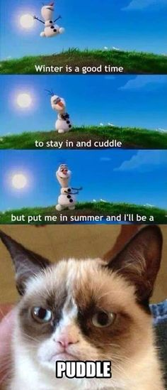 I love grumpy cat! Sadly some people can be grumpy cat ! Grumpy Cat Quotes, Funny Grumpy Cat Memes, Funny Animal Jokes, Cute Funny Animals, Funny Animal Pictures, Animal Memes, Funny Cute, Hilarious, Grumpy Kitty