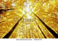 beechwood in AUTUMN - stock photo