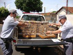 Homem é multado em R$ 8,5 mil por manter 17 aves silvestres em cativeiro | Após denúncia, PM encontrou 129 pássaros em casa em Jaboticabal (SP). Criador já havia sido multado em R$ 5 mil pelo mesmo motivo há dois anos. http://mmanchete.blogspot.com.br/2013/01/homem-e-multado-em-r-85-mil-por-manter.html#.UP27nCeCmSo