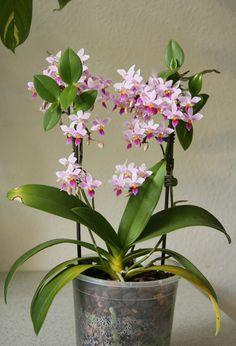 Espaços para Orquídeas  em vasos