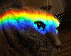 Rainbow Cat | rainbow-cat-returns.jpg