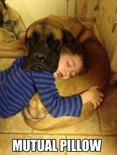 Mutual Pillow funny picture