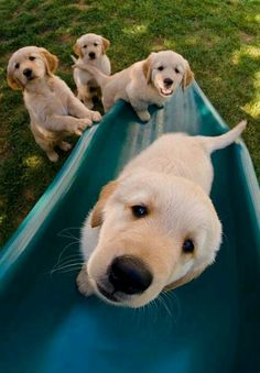 Puppies on the playground