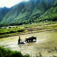 Dibalik Toba Lake, Medan, North Sumatera