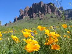 Wildflowers in the foreground with Superstition Mountain in the background.
