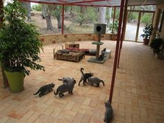 Outdoor Cat Rooms and Areas | Cat Enclosures: A safe outdoor heaven for cats - Cat Enclosure ...