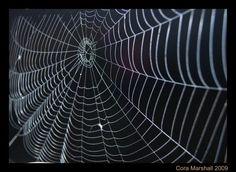 Spider Web Photograph