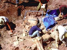 Have Archaeologists Found Skeletons of Biblical Giants in Greece? After research, This excavation was a dinosaur excavation, pics were photo- shopped. This article explains research and leads to jw.org site in which an explanation of nephilims is biblically proven.