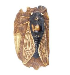 An ivory netsuke of a cicada Late 19th century
