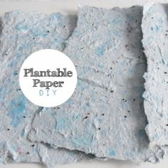 Seed filled paper that grows! Make plantable paper at home! Easy DIY.