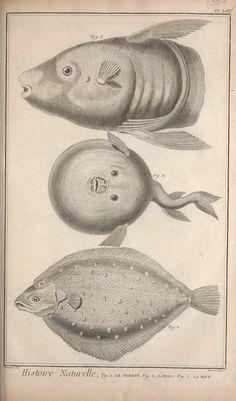 t.6 (1768) - Recueil de planches, sur les sciences, les arts libéraux, et les arts méchaniques : - Biodiversity Heritage Library