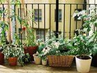 5 Herbs and Veggies that love growing indoors.