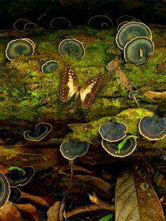 papillon, mousse, champignons, vert