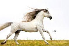 Google Image Result for http://4.bp.blogspot.com/_4PkQqQWIgLs/SWJhTfdq5tI/AAAAAAAAAgQ/ZXmRGN4xBgw/s400/Oroz_AV_08_121.jpg