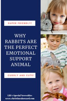 Why Rabbits Are The Perfect Emotional Support Animal - Christine A Howard Family Deal, Emotional Support Animal, Indoor Pets, Like A Cat, Types Of Animals, Animal 2, Pet Beds, Special Needs