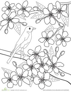 cherry blossoms | zentangles | pinterest | cherry blossoms ... - Cherry Blossom Tree Coloring Pages
