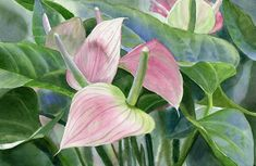 Sharon Freeman   WATERCOLOR