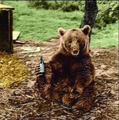20 Images of Corporal Wojtek, the Polish Bear and Hero of WWII. Wojtek Bear, Battle Of Monte Cassino, Bear Drink, Poland History, Bear Cubs, Grizzly Bears, Tiger Cubs, Tiger Tiger, Bengal Tiger
