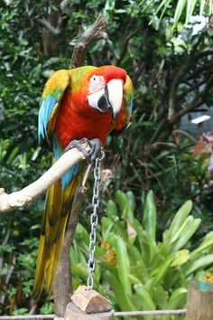 The Parrot Place - Kerikeri - Reviews of The Parrot Place - TripAdvisor
